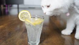 碳酸饮料难拒绝?推荐一款操作超简单的气泡水机